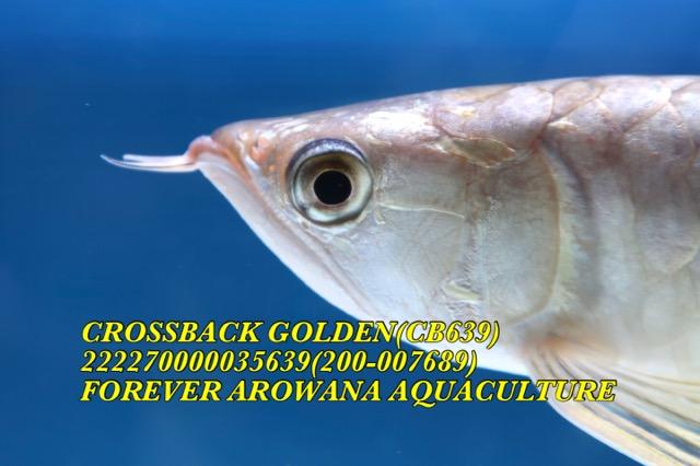 28FDB40C-8AA1-4ED4-A692-30260ACCB712.jpeg