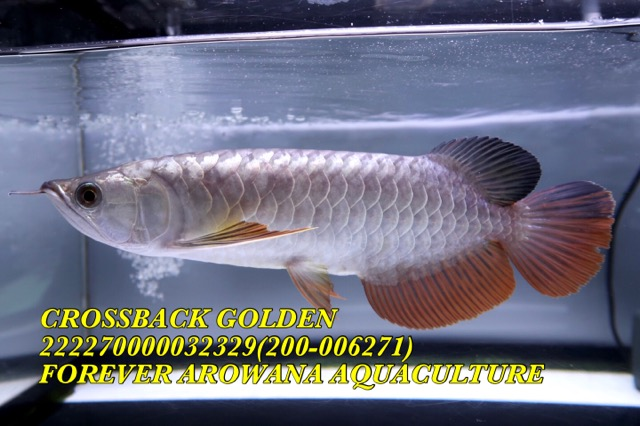 5BBBBD99-EE9B-4043-A7C9-4408CEA86CBF.jpeg
