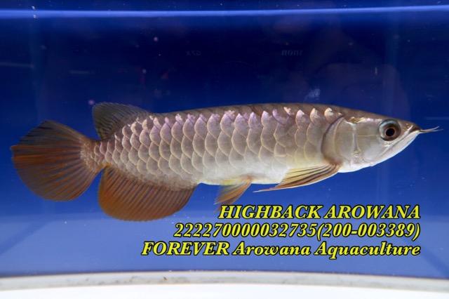 BAFA2A6E-0204-4B43-AF26-F59274D6BD4F.jpeg